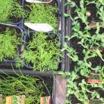gardeningforgood